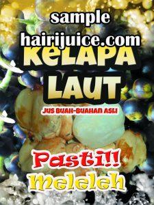 sticker balang air kelapa laut